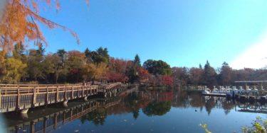 井の頭公園の紅葉2019