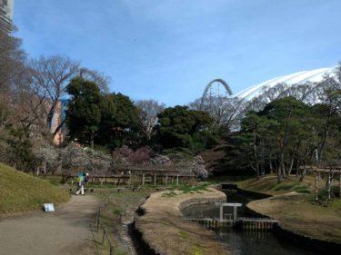 小石川後楽園の梅林。背後には東京ドームとジェットコースター